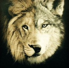 I would love to have this as a tattoo. Definitely would start my sleeve like this. Half lion half wolf.