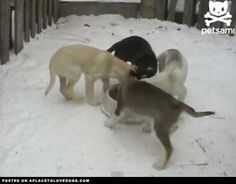 Merry Doggie Go Round | Video • dog dogs puppy puppies cute doggy doggies adorable funny fun silly photography