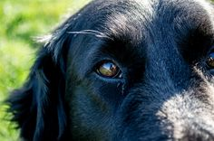 Spieglung im Auge Photography Photos, Explore, Dogs, Animals, Eyes, Animaux, Doggies, Animal, Animales