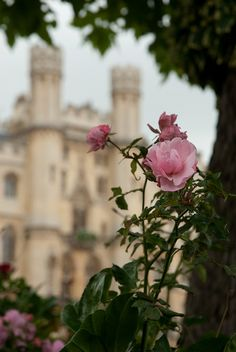"""But round about the castle there began to grow a hedge of thorns..."" 
