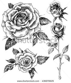 Single roses drawing set | Tats | Pinterest | Single rose, Rose ...