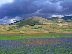 Castelluccio di Norcia photographed by Iridium1 on Flickr #flower #italy #flickr