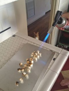 That cat reminds me of Paughey.  Always attentive whenever there are marshmallows in use.