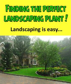 9 Best Low Maintenance Landscaping images | Low maintenance ... House Maintenance Plants Html on house lighting, house insurance, tree maintenance, house demolition, house real estate, grass maintenance, house plumbing, house palm tree identification, house design, house plants that clean the air, house plants and their names, house plants for fall,