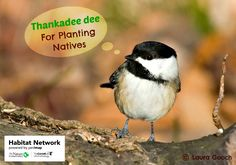 This spring consider adding native plants to your landscape. The birds, bees, butterflies, etc, will thank you!