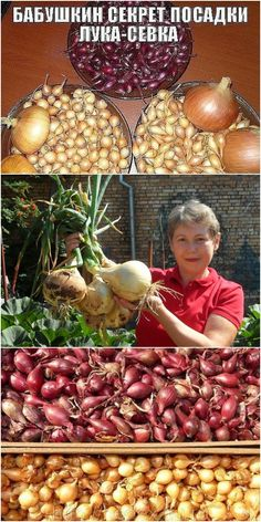 Edible Plants, Small Farm, Farm Gardens, Recipe Of The Day, Vegetable Garden, Garden Design, Christmas Bulbs, Homemade, Vegetables