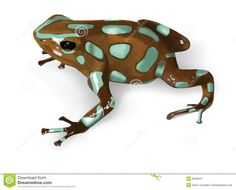 Green And Black Poison-Dart Frog - Vector Stock Photography ...