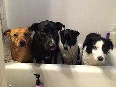 Puppies Got a bath!!