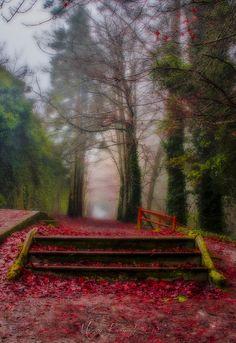Photograph Autumn walk... by Martin Kavanagh on 500px