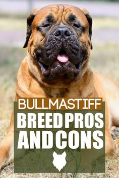 When choosing a dog breed for you home you should always and up the pros and cons and today we break down the pros and cons of a BULLMASTIFF. German Dog Breeds, Giant Dog Breeds, Giant Dogs, Large Dog Breeds, Large Dogs, Best Guard Dog Breeds, Best Guard Dogs, Mastiff Dog Breeds, Caucasian Shepherd Dog