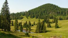 TUDOR PHOTO BLOG: Padis-Zona Turistica,Padis-Touristic Zone,Muntii Apuseni Mountains,Romania,Europe Photo Blog, True Beauty, Tudor, Romania, Vineyard, Europe, Mountains, Country, Nature