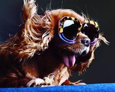 Instagram pup Toast in Karen Walker's sunglasses campaign