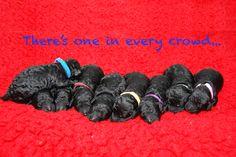 Hailey's 9 little wonders...