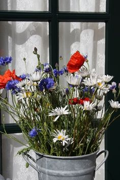 Red, white, and blue flowers!