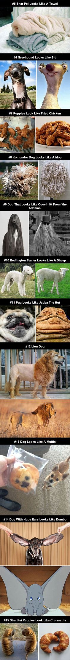 Funny! Dogs That Look Like Other Things