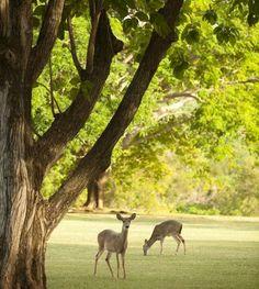 wildlife at virgin islands national park jpg 853x1280