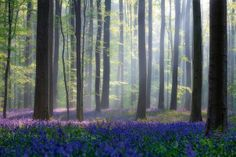 The magical forest, Belgium