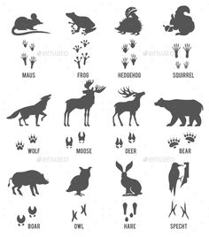 Illustration of Set of Animal and Bird Trails with Name.Vector Set of Black Forest Animals and Birds Silhouettes vector art, clipart and stock vectors. Wilderness Survival, Camping Survival, Survival Skills, Bushcraft Skills, Hirsch Silhouette, Bird Silhouette, Animal Footprints, Dinosaur Tracks, Animal Tracks