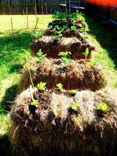Grow the best tomato plants... Hay Bale Gardening...Might have to try this!