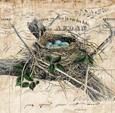 Shoregirl's Creations: Free vintage bird's nest paper