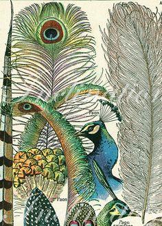 peacock vintage