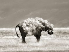 An elephant in sheep's clothing