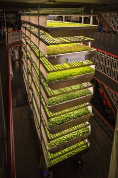 Aeroponics a start-up company in Newark that is developing commercial scale hydroponic vegetable fa&; Aeroponics a start-up company in Newark that is developing commercial scale hydroponic vegetable fa&;