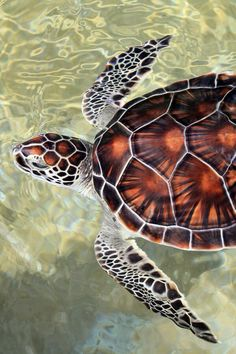 Would love this turtle as a tatoo