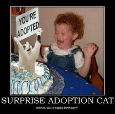 Birthday Surprises - not always what their cracked up to be...
