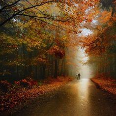 treescape autumn roads