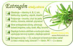 Estragón – dračia pomoc proti problémom... | Peknetelo.eu