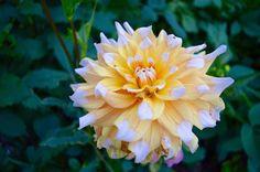 WHAT IF... - Elsa P. Elsa, About Me Blog, Plants, Plant, Planets