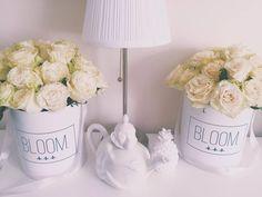 Rose flowerbox, Flowerbox, cvijece u kutiji