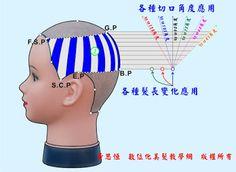 Blogger-黃思恒數位化美髮資訊平台: 剪髮造型實務應用介紹-縱髮片數位化結構圖