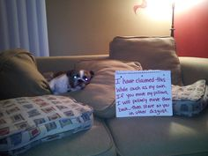 My granddog Dobby's pic Heidi submitted made it on the dog shaming site! LMAO!!!!