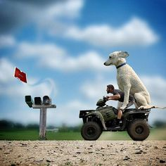 Photos Show What A Huge Part Dog Plays In Man's Life #photography #photo https://www.thedodo.com/dog-larger-than-life-1627397703.html?xrs=RebelMouse_fb