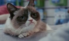 The trailer for Grumpy Cat's movie has arrived http://metro.co.uk/2014/11/01/hold-everything-the-trailer-for-grumpy-cats-first-foray-into-movies-has-arrived-4931117/ …