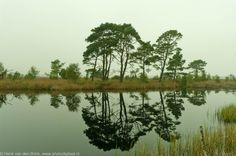 Dwingelderveld, Drenthe in The Netherlands