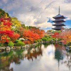 Kyoto, Japan at Toji Pagoda in Autumn.    #viennaimports