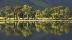 The most photographed trees in the Lake District? These iconic trees sit at the foot of Fleetwith Pike at the southern end of Buttermere lake. Nature Tree, Lake District, Landscapes, Southern, England, Trees, River, Mountains, Photos