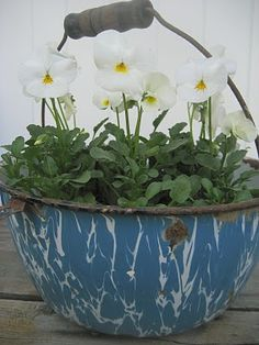 Love plantings in old Enamelware!!!