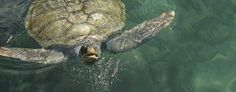 Sea Turtle - Beach Vacation Rentals - Pompano Beach, Florida