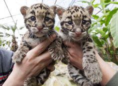 Αξιολατρευτα νεογεννητα ζωακια