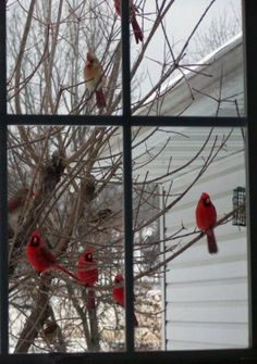 #Birds outside my window (some say Cardinals are relatives coming back to see us...)