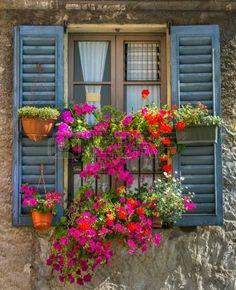 old house flower: Weinlese mit offenem Fensterläden aus Holz und frische Blumen