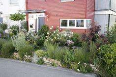 Vorgarten mit Trockenmauer