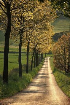 A dirt country road.