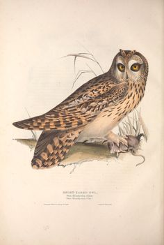 https://flic.kr/p/fjw5SK   n185_w1150   The birds of Europe.. London,Printed by R. and J.E. Taylor, pub. by the author,1837.. biodiversitylibrary.org/page/42174399