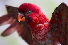 Cardinal Lori