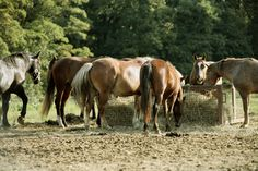 Horse Nutrition Health Center   EquiMed - Horse Health Matters